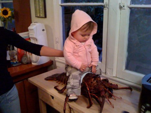 Lobsterbaby