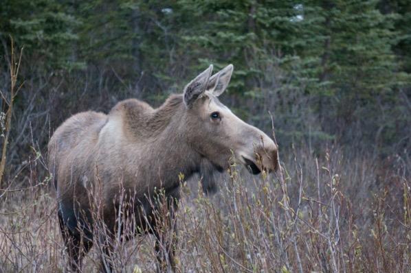 Alaska Pre trip 132